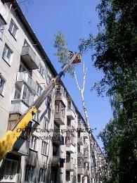 Снос и обрезка деревьев.Утилизация.
