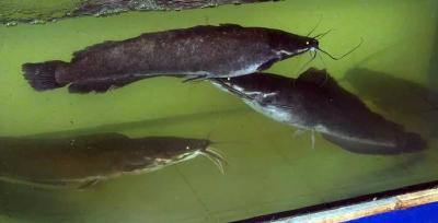 УЗВ (рыбная ферма) - строительство и сервис